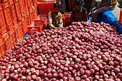 25 million boxes of apples sold in Himachal