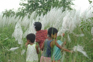 Children plucking Kash flower at Bagma, near Udaipur. TIWN Pic Sept 15