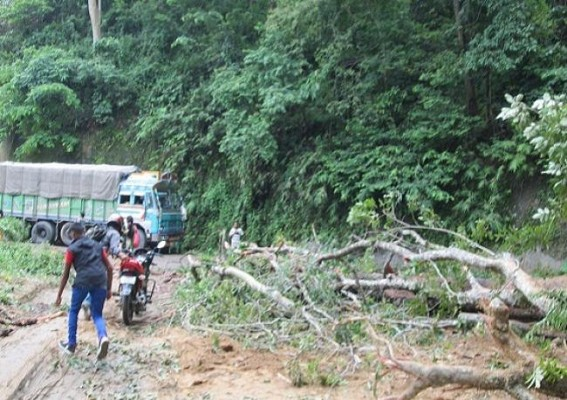 Traffic disrupted after tree falls at Udaipur-Amarpur road