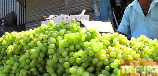 Fruit-sellers selling grapes at Klayanpur. TIWN Pic Feb 8