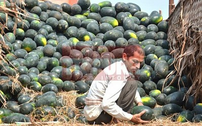 Labour sorting watermelon at MG Bazar. TIWN Pic Feb 26