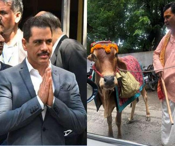 A holy cow which can predict your future: Robert Vadra