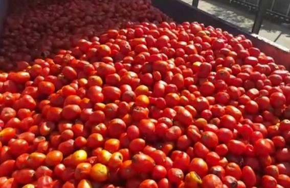 After Onion, price hike hits Tomato eaters