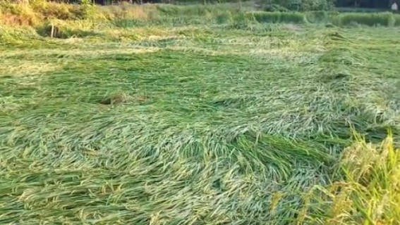 Cyclone Bulbul: Tripura farmers demand compensation to losses