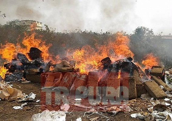 Huge quantity of phsensedyl, ganja destroyed