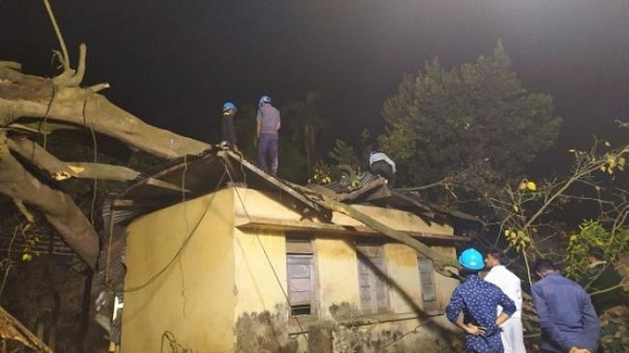 2 Govt offices damaged after a big tree collapsed, no casualty