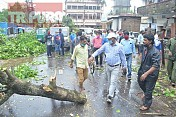 Storm uprooted trees, SDM visited across affected areas