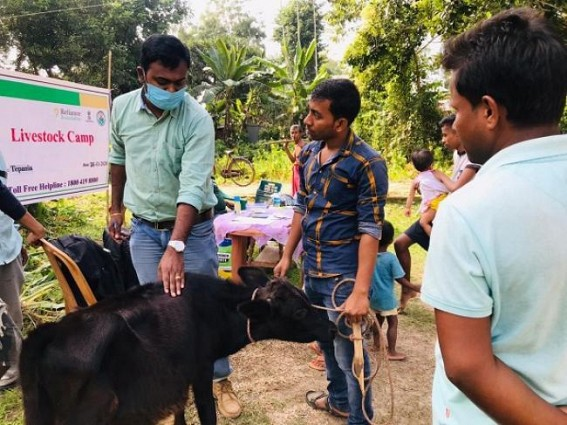 Livestock farmers received free treatment and medicines from Reliance Foundation